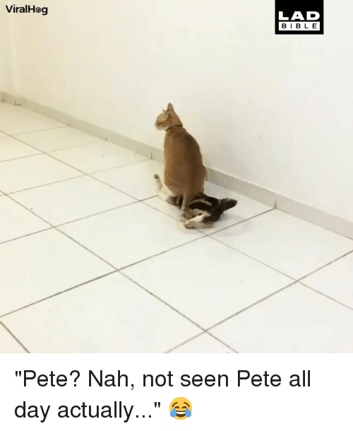"Memes, 🤖, and Day: ViralHeg  LAD  BIBL E ""Pete? Nah, not seen Pete all day actually..."" 😂"