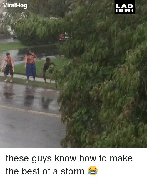 Memes, Best, and How To: ViralHeg  LAD  BIBL E these guys know how to make the best of a storm 😂