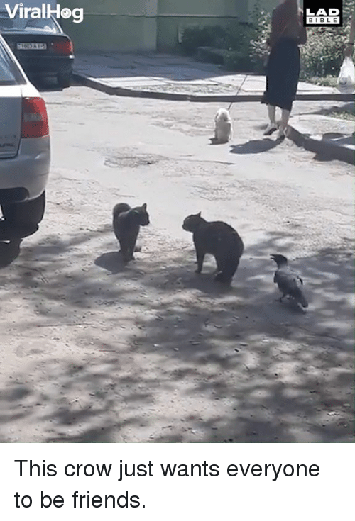 Dank, Friends, and Bible: ViralHeg  LAD  BIBLE This crow just wants everyone to be friends.