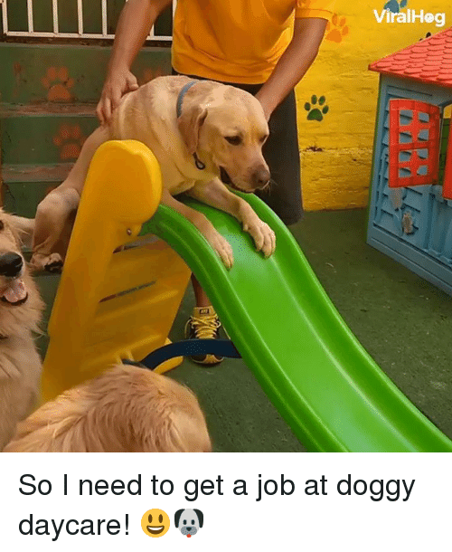 Dank, 🤖, and Job: ViralHeg So I need to get a job at doggy daycare! 😃🐶