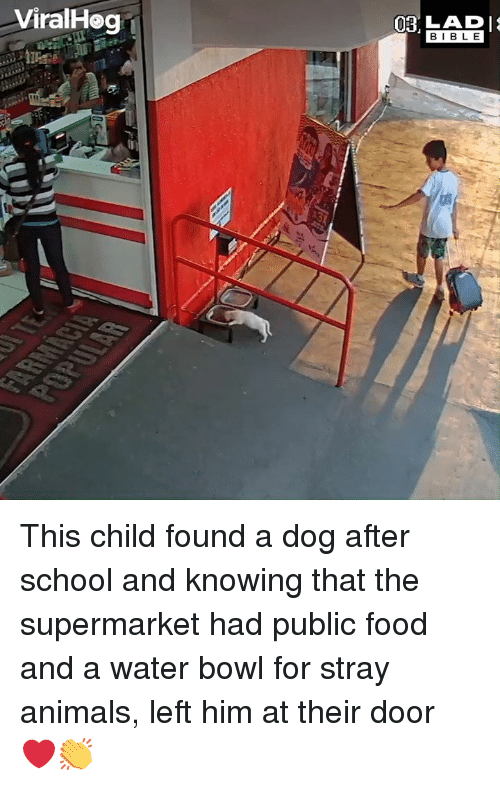 Animals, Dank, and Food: ViralHog 1  BIBL E This child found a dog after school and knowing that the supermarket had public food and a water bowl for stray animals, left him at their door ❤️👏