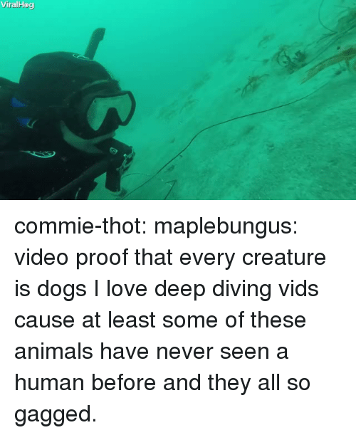 Animals, Dogs, and Love: ViralHog commie-thot: maplebungus: video proof that every creature is dogs  I love deep diving vids cause at least some of these animals have never seen a human before and they all so gagged.