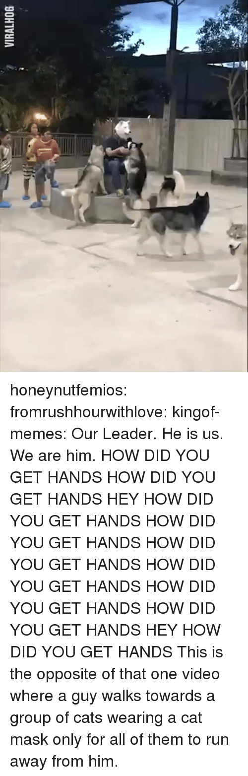 Cats, Memes, and Run: VIRALHOG honeynutfemios:  fromrushhourwithlove:  kingof-memes: Our Leader. He is us. We are him. HOW DID YOU GET HANDS  HOW DID YOU GET HANDS HEY    HOW DID YOU GET HANDS    HOW DID YOU GET HANDS    HOW DID YOU GET HANDS    HOW DID YOU GET HANDS    HOW DID YOU GET HANDS   HOW DID YOU GET HANDS  HEY    HOW DID YOU GET HANDS  This is the opposite of that one video where a guy walks towards a group of cats wearing a cat mask only for all of them to run away from him.