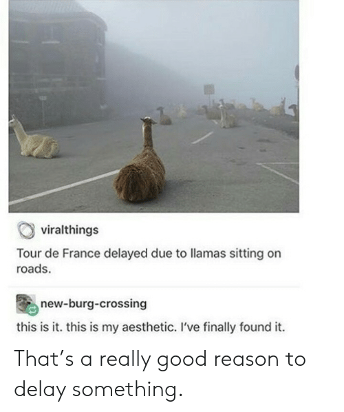 Aesthetic: viralthings  Tour de France delayed due to llamas sitting on  roads.  new-burg-crossing  this is it. this is my aesthetic. I've finally found it. That's a really good reason to delay something.