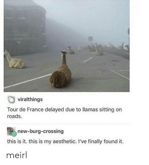 Found It: viralthings  Tour de France delayed due to llamas sitting on  roads  new-burg-crossing  this is it. this is my aesthetic. I've finally found it meirl