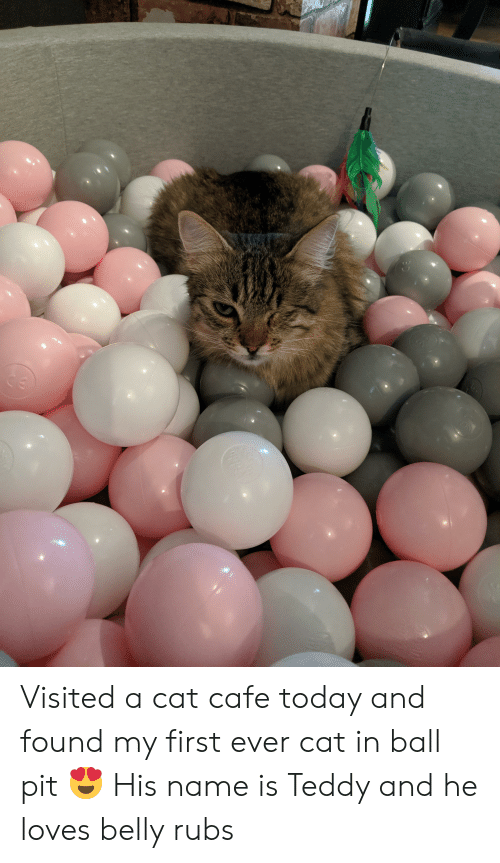 Today, Cat, and Pit: Visited a cat cafe today and found my first ever cat in ball pit 😍 His name is Teddy and he loves belly rubs