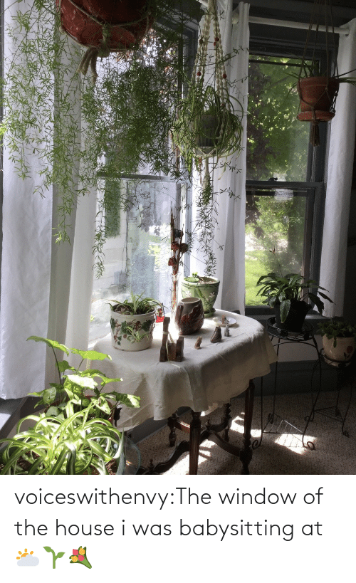 the house: voiceswithenvy:The window of the house i was babysitting at 🌥🌱💐