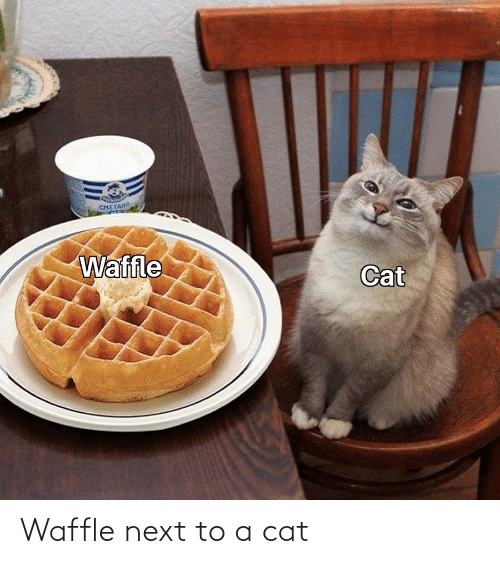 Next To: Waffle next to a cat