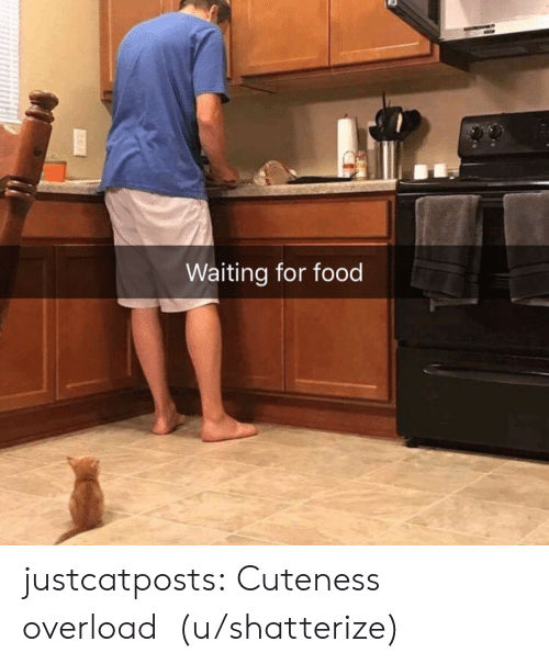 Food, Target, and Tumblr: Waiting for food justcatposts: Cuteness overload  (u/shatterize)