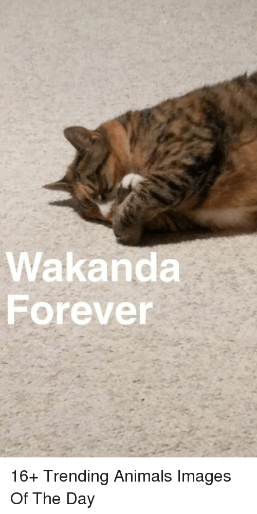 Animals, Forever, and Images: Wakanda  Forever 16+ Trending Animals Images Of The Day