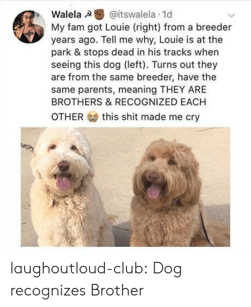 Recognized: Walela,a  @itswalela. 1d  My fam got Louie (right) from a breeder  years ago. Tell me why, Louie is at the  park & stops dead in his tracks when  seeing this dog (left). Turns out they  are from the same breeder, have the  same parents, meaning THEY ARE  BROTHERS & RECOGNIZED EACH  OTHER  this shit made me cry laughoutloud-club:  Dog recognizes Brother