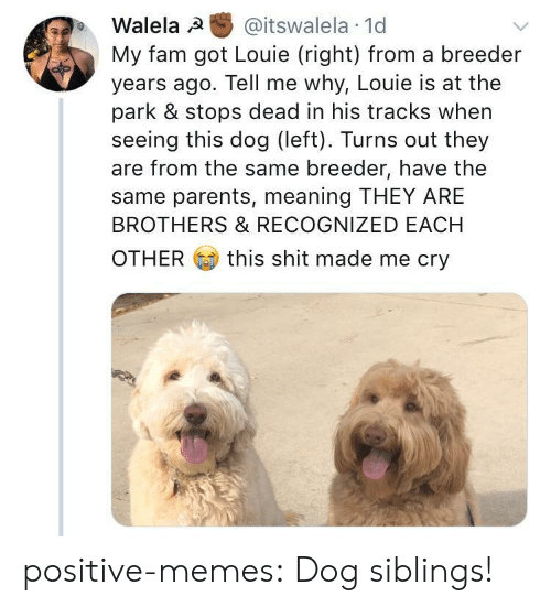 Fam, Memes, and Parents: Walela @itswalela 1d  My fam got Louie (right) from a breeder  years ago. Tell me why, Louie is at the  park & stops dead in his tracks when  seeing this dog (left). Turns out they  are from the same breeder, have the  same parents, meaning THEY ARE  BROTHERS & RECOGNIZED EACH  OTHER  this shit made me cry positive-memes:  Dog siblings!
