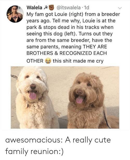 tell me why: Walela @itswalela 1d  My fam got Louie (right) from a breeder  years ago. Tell me why, Louie is at the  park & stops dead in his tracks when  seeing this dog (left). Turns out they  are from the same breeder, have the  same parents, meaning THEY ARE  BROTHERS & RECOGNIZED EACH  OTHER this shit made me cry awesomacious:  A really cute family reunion:)