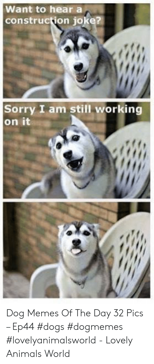 Animals, Dogs, and Memes: Want to heara  construction joke?  Sorry I am still working  on it Dog Memes Of The Day 32 Pics – Ep44 #dogs #dogmemes #lovelyanimalsworld - Lovely Animals World