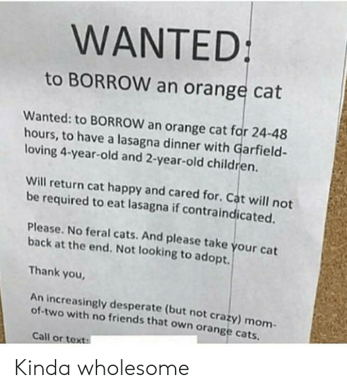 Cats, Children, and Crazy: WANTED:  to BORROW an orange cat  Wanted: to BORROW an orange cat for 24-48  hours, to have a lasagna dinner with Garfield-  loving 4-year-old and 2-year-old children.  Will return cat happy and cared for. Cat will not  be required to eat lasagna if contraindicated.  Please. No feral cats. And please take your cat  back at the end. Not looking to adopt.  Thank you  An increasingly desperate (but not crazy) mom  of-two with no friends that own orange cats  Call or text: Kinda wholesome