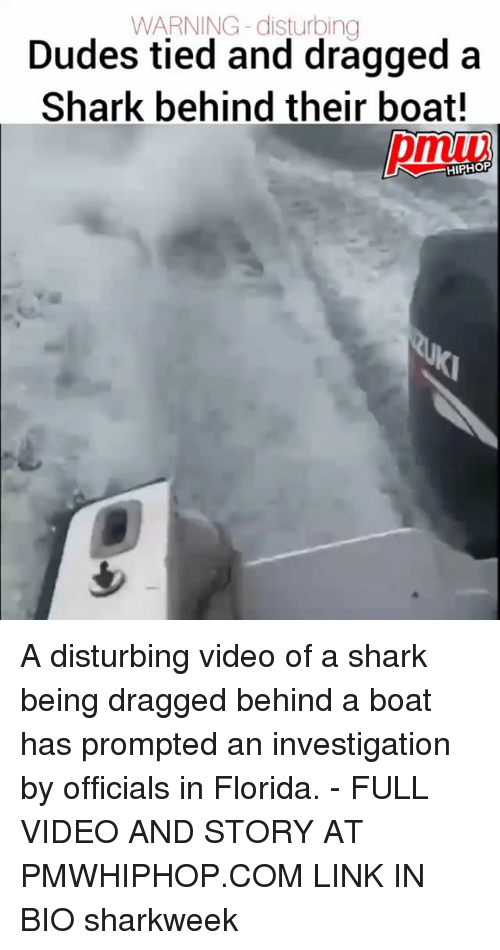 Memes, Shark, and Florida: WARNING -disturbing  Dudes tied and dragged a  Shark behind their boat!  pmiv  HIPHOP A disturbing video of a shark being dragged behind a boat has prompted an investigation by officials in Florida. - FULL VIDEO AND STORY AT PMWHIPHOP.COM LINK IN BIO sharkweek