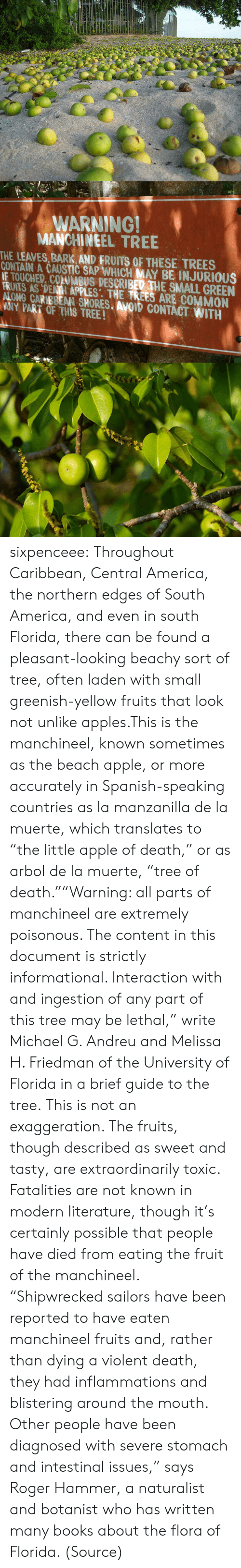 """America, Apple, and Books: WARNING!  MANCHINEEL TREE  THE LEAVES, BARK AND FRUITS OF THESE TREES  CONTAIN A CAUSTIC SAP WHICH MAY BE INJURIOUS  IE TOUCHED. COLUMBUS DESCRIBED THE SMALL GREEN  FRIATS AS DENII APPLES: THE TREES ARE COMMON  ALONG CARIBBEAN SHORES. AVOID CONTACT WITH  ANY PART OF THIS TREE! sixpenceee:  Throughout Caribbean, Central America, the northern edges of South America, and even in south Florida, there can be found a pleasant-looking beachy sort of tree, often laden with small greenish-yellow fruits that look not unlike apples.This is the manchineel, known sometimes as the beach apple, or more accurately in Spanish-speaking countries as la manzanilla de la muerte, which translates to """"the little apple of death,"""" or as arbol de la muerte, """"tree of death.""""""""Warning: all parts of manchineel are extremely poisonous. The content in this document is strictly informational. Interaction with and ingestion of any part of this tree may be lethal,"""" write Michael G. Andreu and Melissa H. Friedman of the University of Florida in a brief guide to the tree.This is not an exaggeration. The fruits, though described as sweet and tasty, are extraordinarily toxic. Fatalities are not known in modern literature, though it's certainly possible that people have died from eating the fruit of the manchineel. """"Shipwrecked sailors have been reported to have eaten manchineel fruits and, rather than dying a violent death, they had inflammations and blistering around the mouth. Other people have been diagnosed with severe stomach and intestinal issues,"""" says Roger Hammer, a naturalist and botanist who has written many books about the flora of Florida. (Source)"""