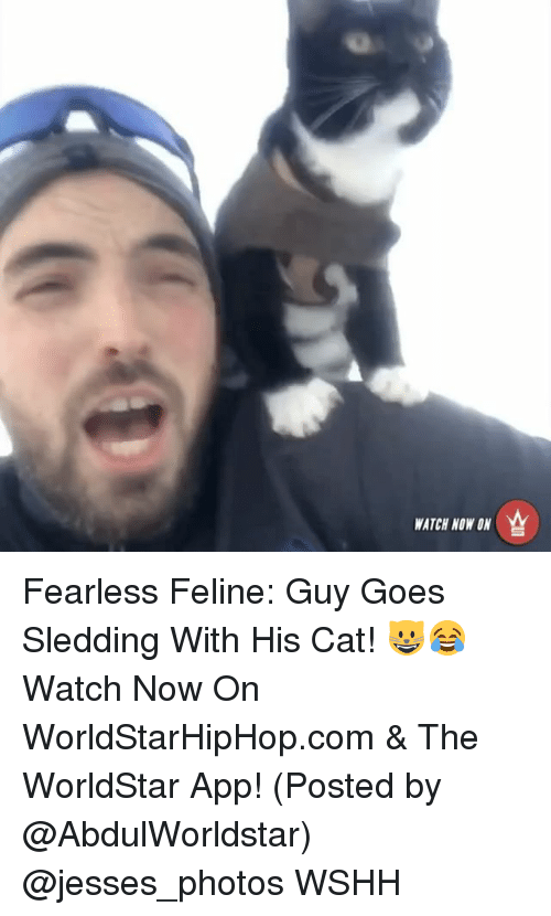 Memes, Worldstar, and Worldstarhiphop: WATCH NOW ON Fearless Feline: Guy Goes Sledding With His Cat! 😺😂 Watch Now On WorldStarHipHop.com & The WorldStar App! (Posted by @AbdulWorldstar) @jesses_photos WSHH