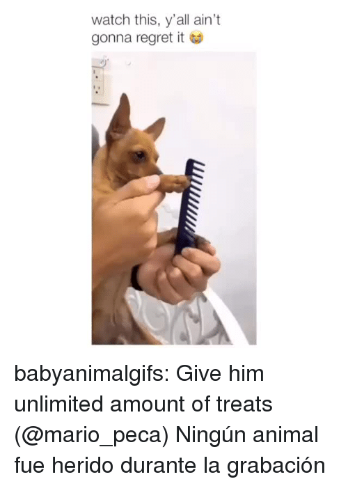 Instagram, Regret, and Tumblr: watch this, y'all ain't  gonna regret it babyanimalgifs: Give him unlimited amount of treats  (@mario_peca)   Ningún animal fue herido durante la grabación