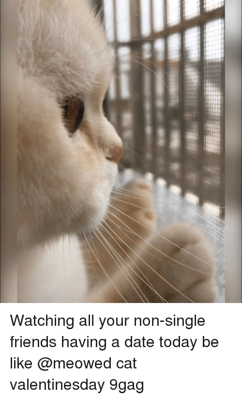 9gag, Be Like, and Friends: Watching all your non-single friends having a date today be like @meowed cat valentinesday 9gag