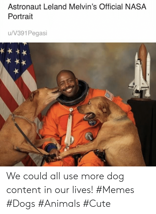 Content: We could all use more dog content in our lives! #Memes #Dogs #Animals #Cute