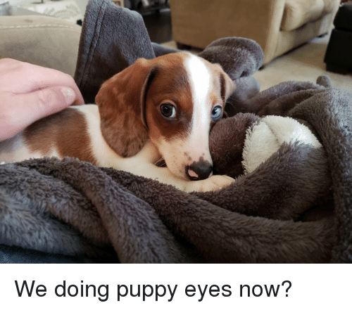 Puppy, Now, and Eyes: We doing puppy eyes now?