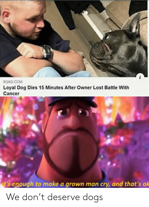 Dogs: We don't deserve dogs