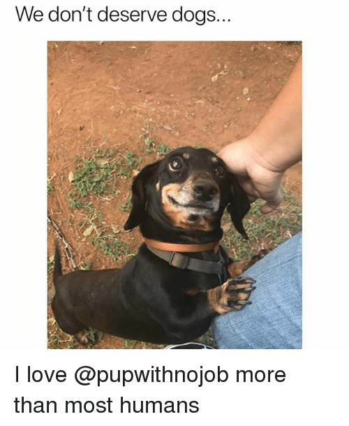 We Don't Deserve Dogs I Love More Than Most Humans | Dogs ...