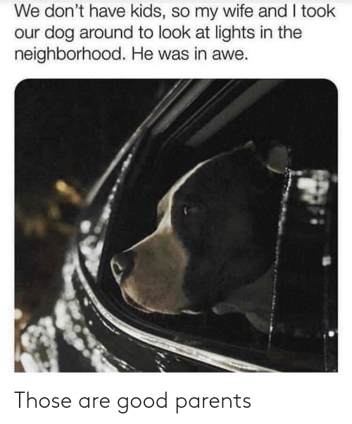Parents, Good, and Kids: We don't have kids, so my wife and I took  our dog around to look at lights in the  neighborhood. He was in awe. Those are good parents