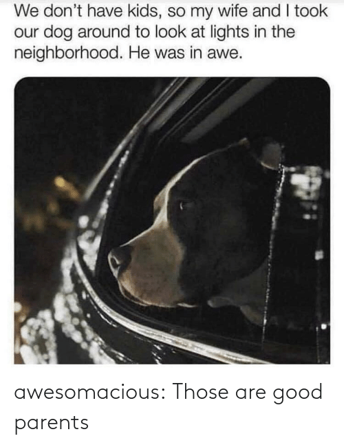 Parents, Tumblr, and Blog: We don't have kids, so my wife and I took  our dog around to look at lights in the  neighborhood. He was in awe. awesomacious:  Those are good parents