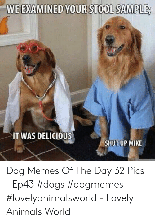 Animals, Dogs, and Memes: WE EXAMINED YOUR STOOL SAMPLE  IT WAS DELICIOUS  SHUTUP MIKE Dog Memes Of The Day 32 Pics – Ep43 #dogs #dogmemes #lovelyanimalsworld - Lovely Animals World