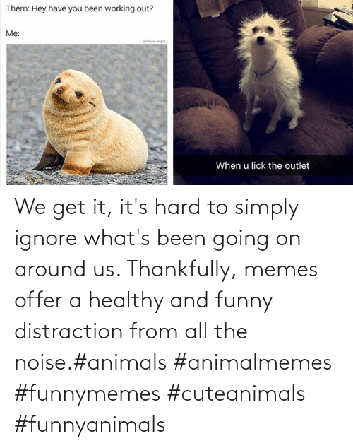 Simply: We get it, it's hard to simply ignore what's been going on around us.  Thankfully, memes offer a healthy and funny distraction from all the noise.#animals #animalmemes #funnymemes #cuteanimals #funnyanimals