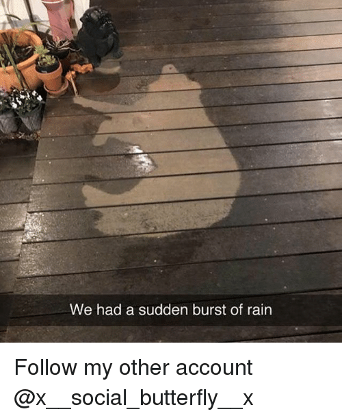 Memes, Butterfly, and Rain: We had a sudden burst of rain Follow my other account @x__social_butterfly__x