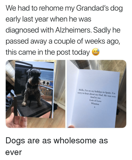 Dad, Dogs, and Hello: We had to rehome my Grandad's dog  early last year when he was  diagnosed with Alzheimers. Sadly he  passed away a couple of weeks ago,  this came in the post today  Hello, I'm on my holidays in Spain. I'm  sormy to hear about my Dad. He was very  kind to me.  Lots of Love  Winston Dogs are as wholesome as ever