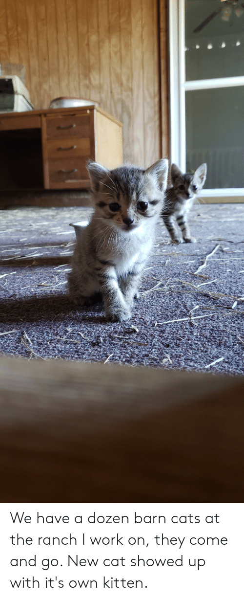 Cats, Work, and Cat: We have a dozen barn cats at the ranch I work on, they come and go. New cat showed up with it's own kitten.