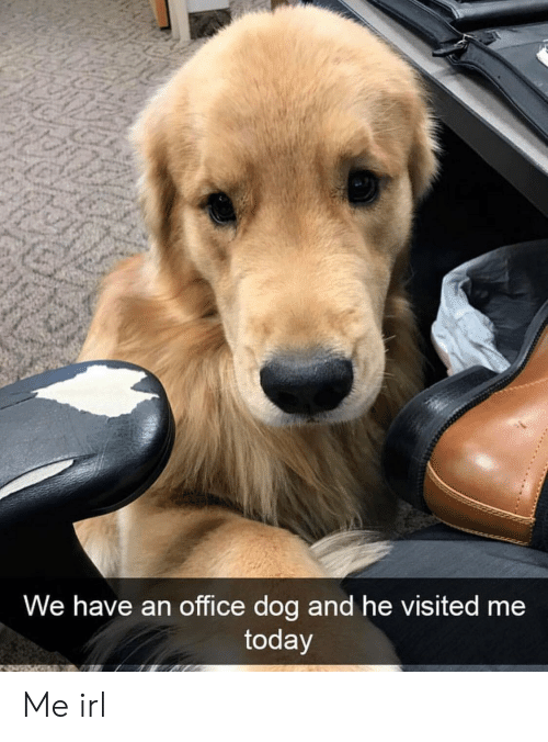 Office, Today, and Irl: We have an office dog and he visited me  today Me irl