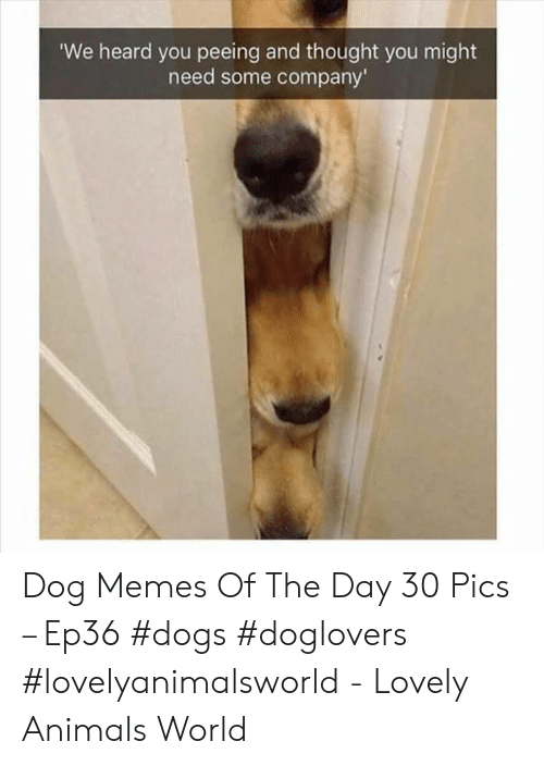 Animals, Dogs, and Memes: We heard you peeing and thought you might  need some company' Dog Memes Of The Day 30 Pics – Ep36 #dogs #doglovers #lovelyanimalsworld - Lovely Animals World
