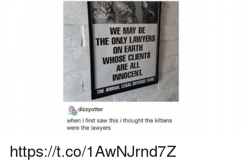 Memes, Saw, and Animal: WE MAY BE  THE ONLY LAWYERS  ON EARTH  WHOSE CLIENTS  ARE ALL  INNOCENT  THE ANIMAL LEGAL DEFENSE FUND  dizzyotter  when i first saw this i thought the kittens  were the lawyers https://t.co/1AwNJrnd7Z