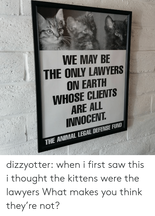 Saw, Tumblr, and Animal: WE MAY BE  THE ONLY LAWYERS  ON EARTH  WHOSE CLIENTS  ARE ALL  INNOCEVT  THE ANIMAL LEGAL DEFENSE FUND dizzyotter: when i first saw this i thought the kittens were the lawyers  What makes you think they're not?