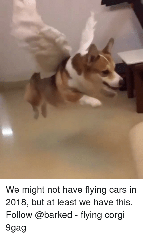 9gag, Cars, and Corgi: We might not have flying cars in 2018, but at least we have this. Follow @barked - flying corgi 9gag