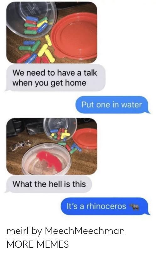 When You Get Home: We need to have a talk  when you get home  Put one in water  What the hell is this  It's a rhinoceros meirl by MeechMeechman MORE MEMES