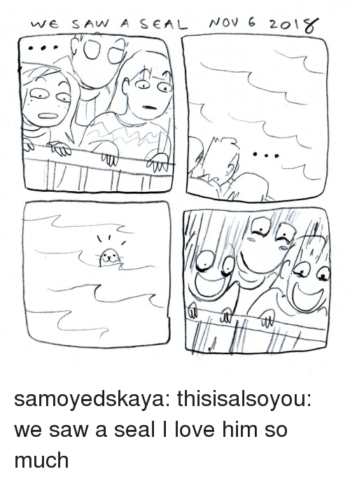 Love, Saw, and Tumblr: we SAW A SEAL NOV 6 20  C) samoyedskaya:  thisisalsoyou: we saw a seal  I love him so much