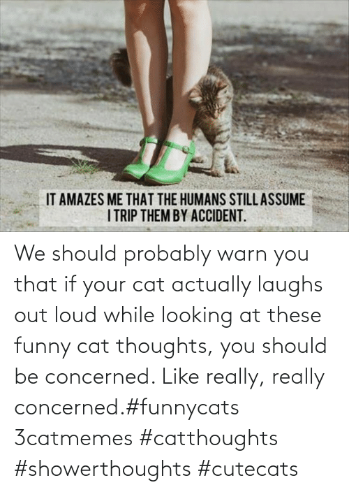 If Your: We should probably warn you that if your cat actually laughs out loud while looking at these funny cat thoughts, you should be concerned. Like really, really concerned.#funnycats 3catmemes #catthoughts #showerthoughts #cutecats