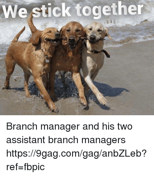 Stick Together: We stick together Branch manager and his two assistant branch managers https://9gag.com/gag/anbZLeb?ref=fbpic