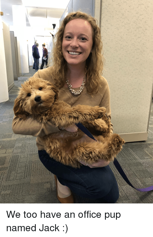 Dogs, Work, and Best: We too have an office pup named Jack :)