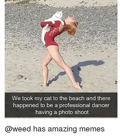 Funny, Memes, and Weed: We took my cat to the beach and there  happ  ened to be a professional dancer  having a photo shoot @weed has amazing memes