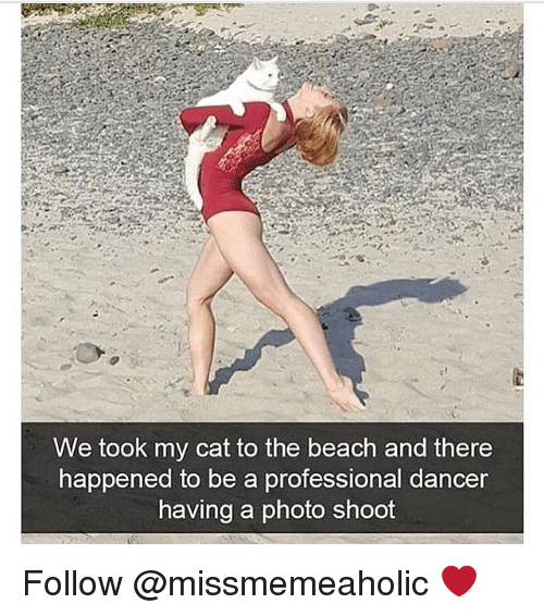 Memes, Beach, and 🤖: We took my cat to the beach and there  happened to be a professional dancer  having a photo shoot Follow @missmemeaholic ❤️