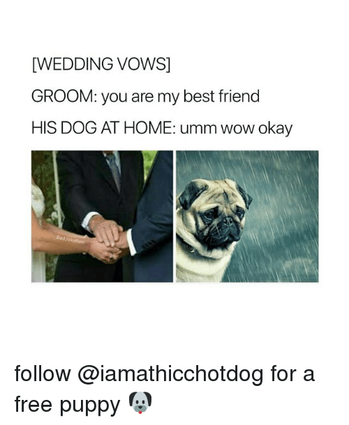 Best Friend, Wow, and Best: [WEDDING VOWS]  GROOM: you are my best friend  HIS DOG AT HOME: umm wow okay  BadJokeBen follow @iamathicchotdog for a free puppy 🐶