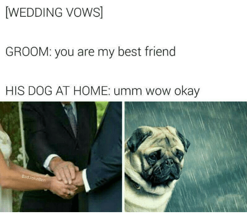 You Are My Best Friend: WEDDING VOWS]  GROOM: you are my best friend  HIS DOG AT HOME: umm wow okay  BadJokeBen