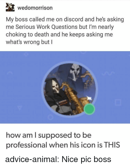 Advice, Tumblr, and Work: wedomorrison  My boss called me on discord and he's asking  me Serious Work Questions but I'm nearly  choking to death and he keeps asking me  what's wrong but I  how am I supposed to be  professional when his icon is THIS advice-animal:  Nice pic boss